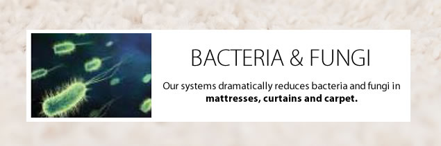 remove-bacteria - fungi-carpet-cleaning