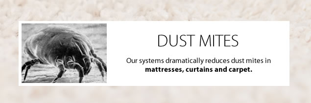 remove-dust-mites-carpet-cleaning